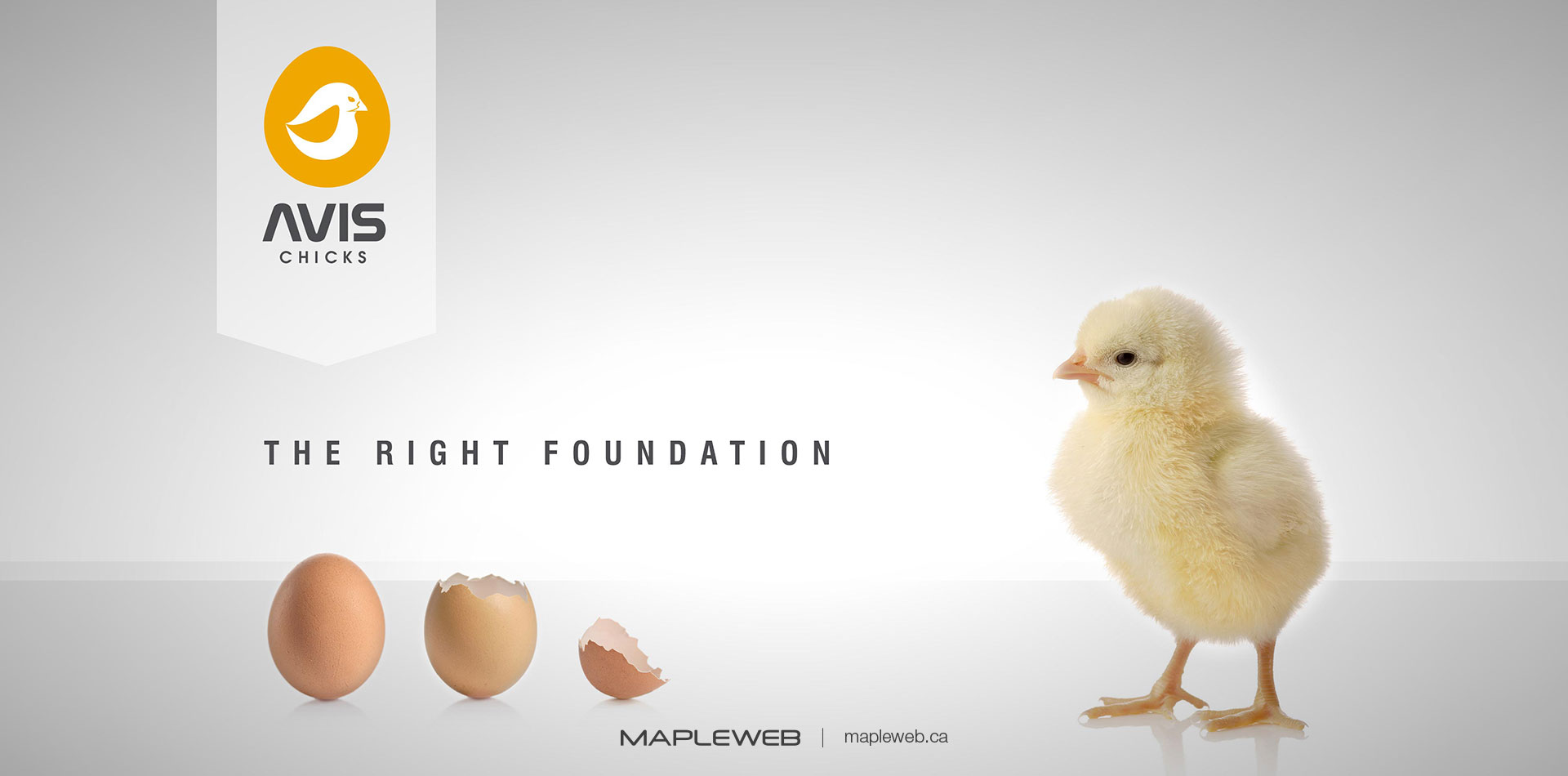 avis-chicks-Vancouver-brand-design-Vancouver-graphic-design-by-mapleweb-canada-chick-eggs-light-grey-background